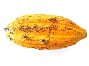 cacao_8341-Cacao-14-cm